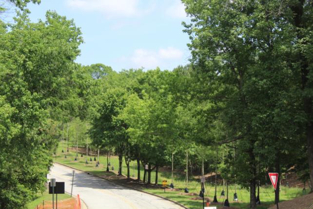 Sprucing Up North Atlanta: New Trees on Campus