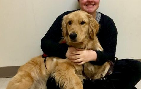Fuzzy and On the Job: Sophomore Stella Thrasher gets aid from Lager, a Golden Retriever service dog on the job that regulates her blood sugar.
